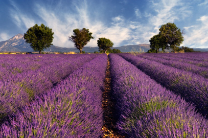Photo of Provence, France