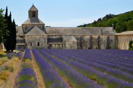 Photo of Sénanque Abbey and lavender field near the village of Gordes, France